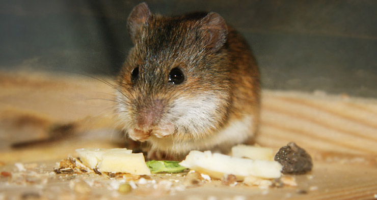 getting rid of rodents